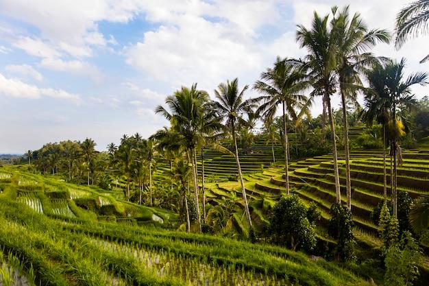 Rijstvelden van jatiluwih in zuidoost-bali