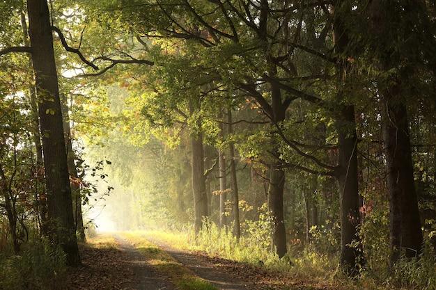 Rijzende zon verlicht de eikenbladeren aan de bomen in het herfstbos