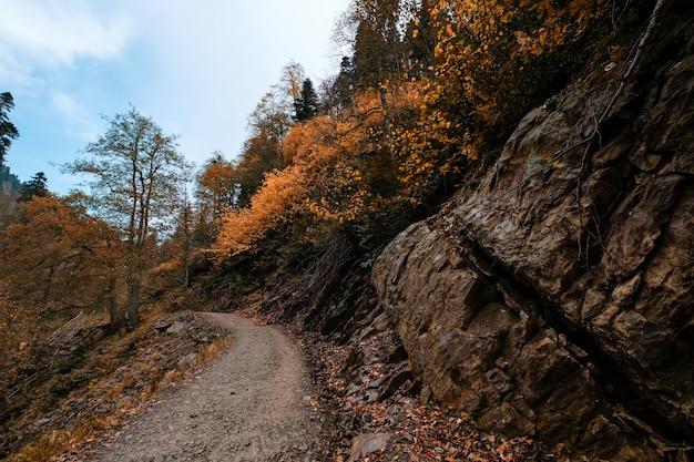 Rivier diep in bergbos. natuur samenstelling. mendelich rivier in de noordelijke kaukasus, rosa khutor, rusland, sochi. trail in herfstbos, mist en regen