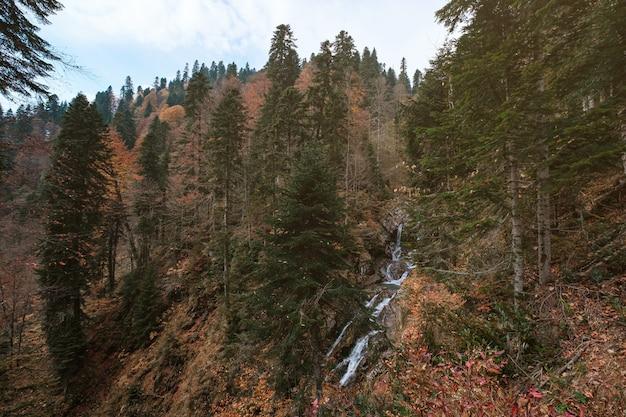 Rivier diep in bergbos. natuur samenstelling.