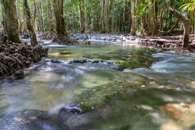 Rivier diep in bergbos. samenstelling van de natuur