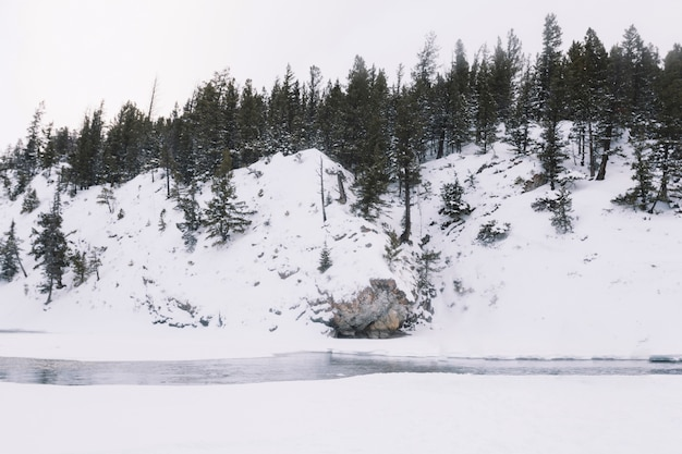 Rivier in besneeuwde bossen