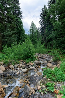 Rivier in de bergen