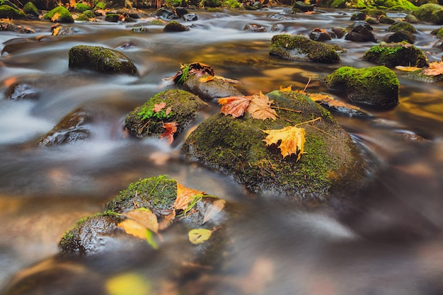 Rivier kamenice in de herfst, boheems zwitserland