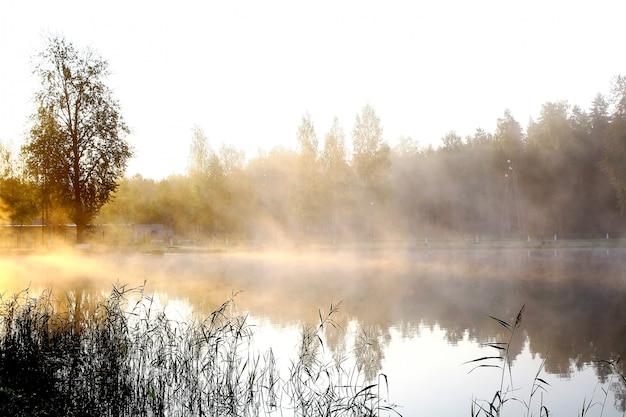 Rivier op natuur landschap