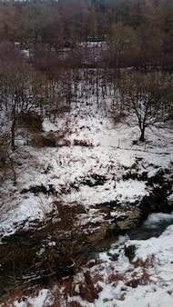 Rivier stroomt door het bos bedekt met sneeuw