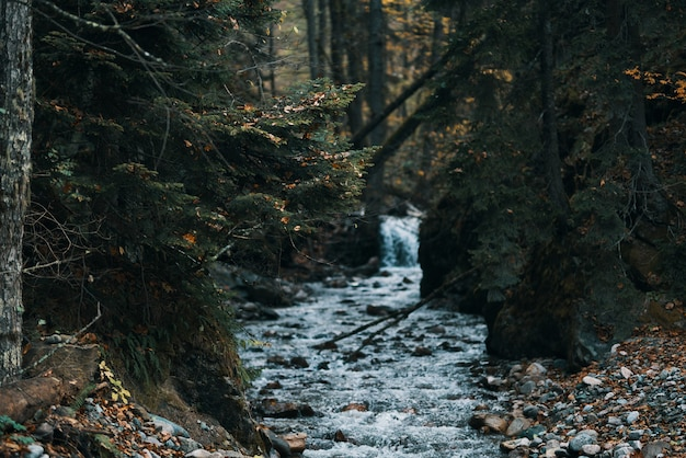 Rivier stroomt tussen de oevers in het bos en reismodeltoerisme