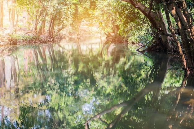 Rivierlandschap met boom bos mooi landschap voor vreedzaam in de lente met zongloed