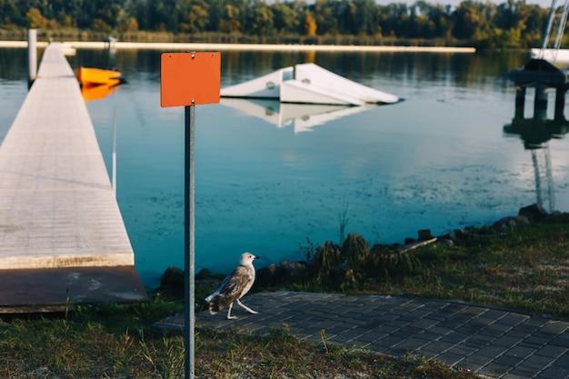 Rivierlandschap met houten pier, wandelende meeuwvogel en oranje leeg bord