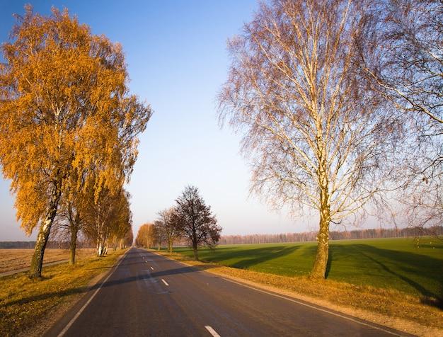 Road herfst en boom