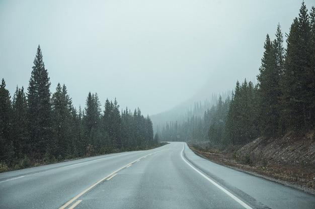 Roadtrip van auto rijden op snelweg met sneeuwstorm in dennenbos in banff national park