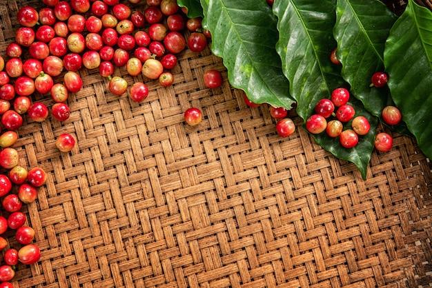 Robusta, arabica, koffiebessen en koffiebonen