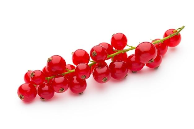 Rode aalbessen stilleven geïsoleerd.
