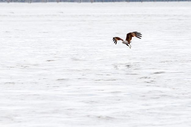 Rode adelaarsvlieg op het overzees in aard in thailand