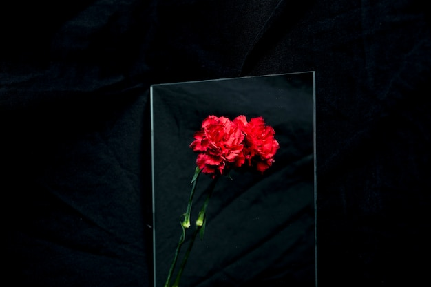 Rode anjerbloem die glas over zwarte achtergrond overdenkt