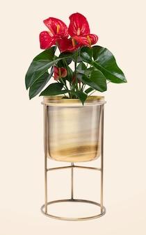 Rode anthurium kamerplant in messing plantenpot