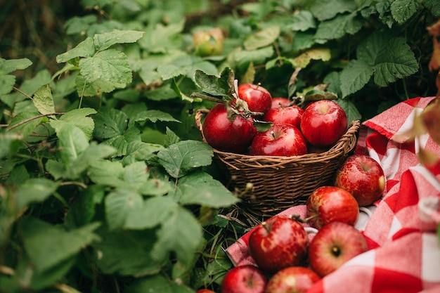 Rode appelen in een mand