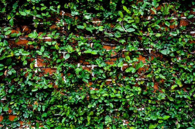Rode bakstenen muur met klimplanten in groene installaties