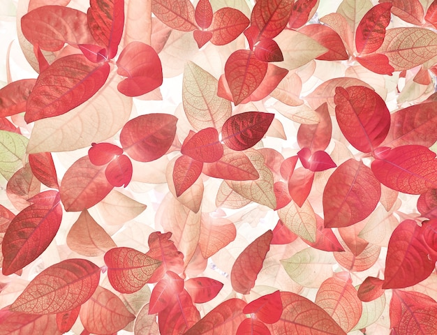 Rode blad gebladerte achtergrond