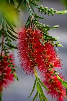 Rode blloming tropische bloemen