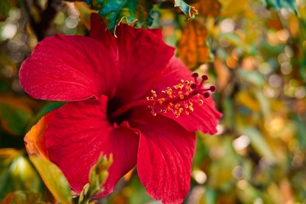 Rode bloem in de tuin