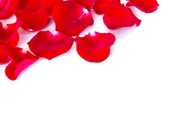Rode bloemblaadjes geïsoleerd op een witte achtergrond