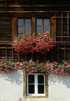 Rode bloemen in bloei