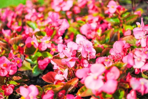 Rode bloemen in de bloembedden van st. petersburg