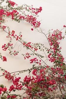 Rode bloemen op beige muur.