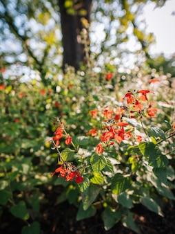 Rode bloemen op de struik