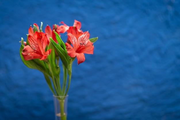 Rode bloemen op een trendy blauwe achtergrond met textuur. close-up met ruimte voor tekst.