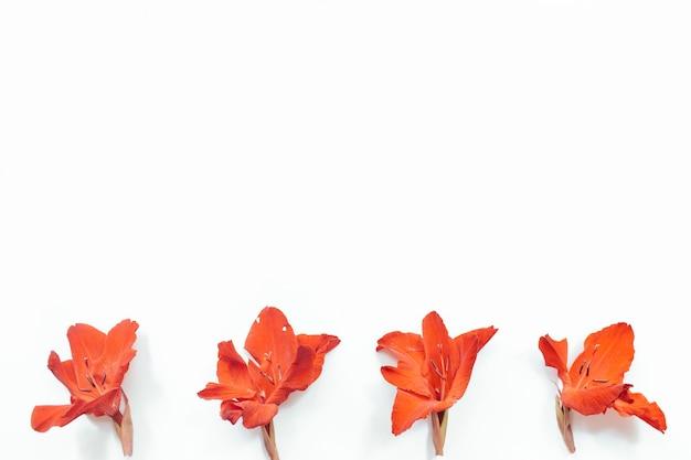 Rode bloemen op witte achtergrond bloemen samenstelling plat lag bovenaanzicht kopie ruimte zomer herfst