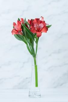Rode bloemen op witte muur. wenskaart voor 14 februari. close-up met ruimte voor tekst. liefde concept