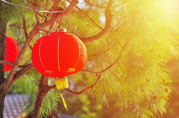 Rode chinese lamp aan de boom in het nieuwe jaar
