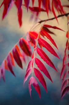 Rode doorbladerde plant