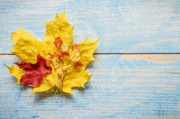 Rode en gele droge herfst esdoorn bladeren en twijgen vallen op een blauwe houten tafel of achtergrond. herfstmaterialen voor de creativiteit en het knutselen van kinderen. ruimte voor tekst