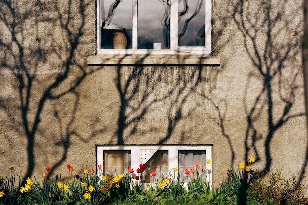 Rode en gele tulpen in een bloembed bij een huis met een kelder. schaduwspel op de gevel van
