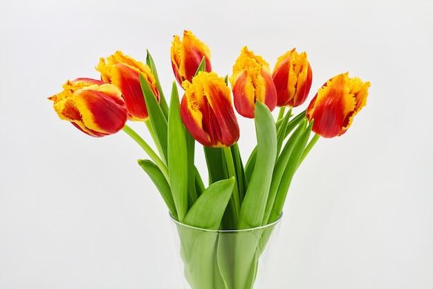 Rode en gele tulpen in een glazen vaas op een witte achtergrond
