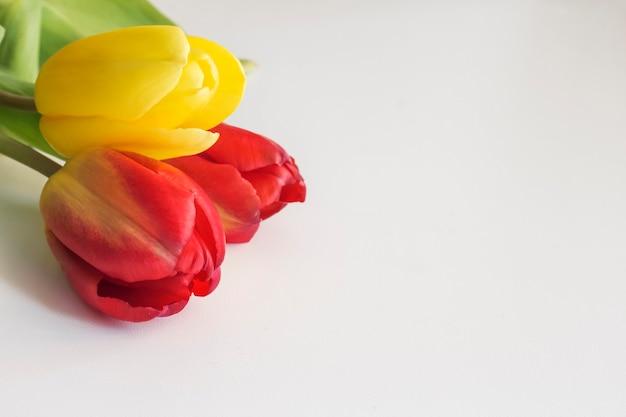 Rode en gele tulpen op een witte achtergrond.
