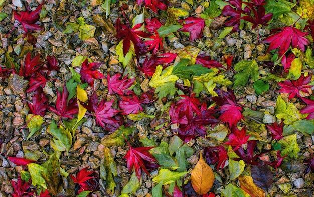 Rode en groene bladeren