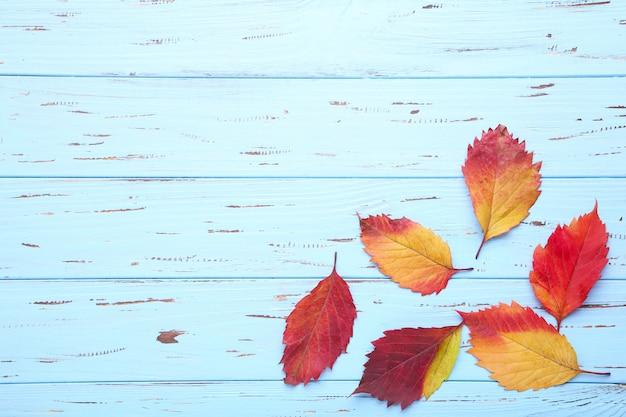 Rode en oranje herfstbladeren op een blauwe tafel achtergrond