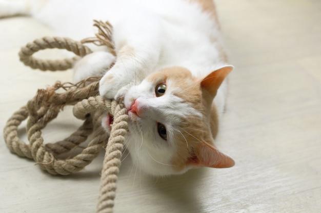 Rode en witte kat speelt met een touw