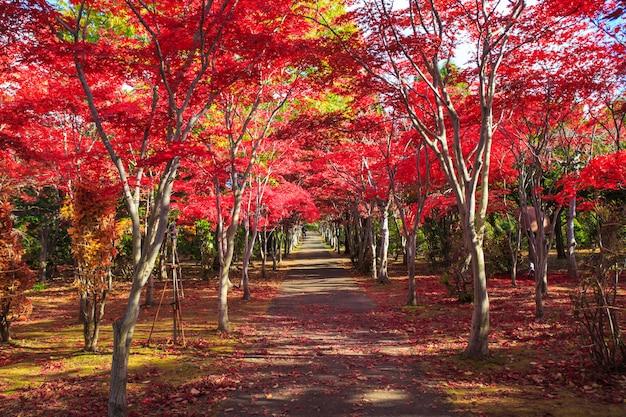 Rode esdoornbladeren op de achtergrond van het de herfstseizoen