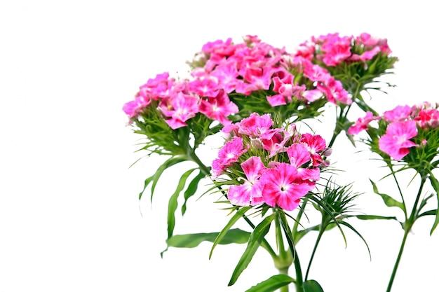 Rode flowerses op witte achtergrond