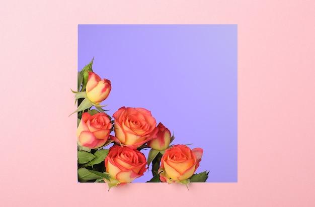 Rode gele rozen op blauwe ondergrond in roze vierkant papier frame