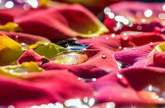 Rode gele rozenblaadjes met druppels water aromatherapie en spa concept wazig florale achtergrond