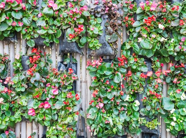 Rode geraniumbloem