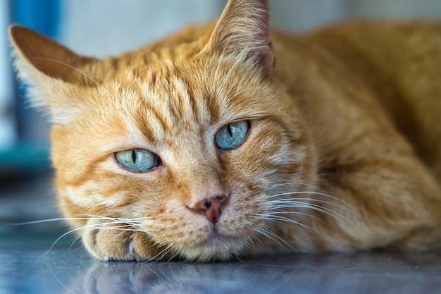Rode gestreepte katkat dicht omhoog