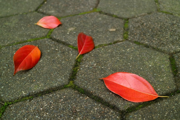 Rode herfst gevallen bladeren op de bestrating voetganger
