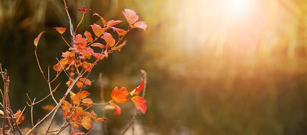 Rode herfstbladeren op een boomtak in de zon tijdens zonsondergang